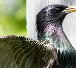bird control Killeen