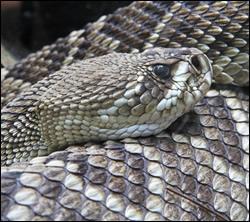 snake removal Killeen