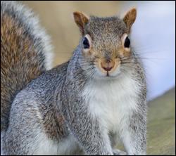 squirrel control Killeen